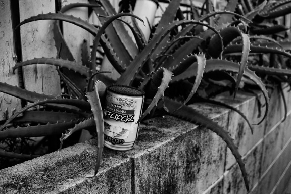 canette cactus