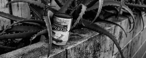 canette-cactus2