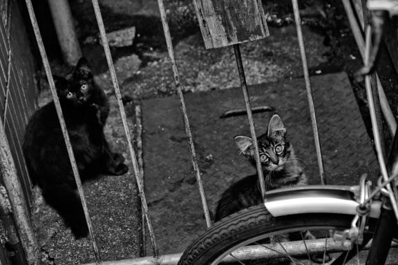 chats centre ville