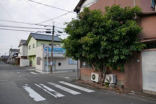 arbre quartier